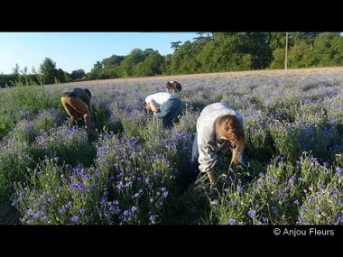 DEG-anjou-fleurs-06
