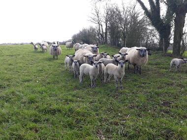 agneaux-maison-royer-53