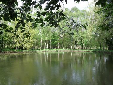 Gîte Jouet à Loupfougères - étang