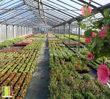 producteur maraicher horticulteur légumes fleurs 53 Mayenne vente directe - PO SERRES PLANTES A MASSIF