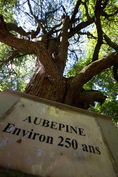 sentier-d-interpretation-arboretum-pontmain-53-iti-cp greboval (8)