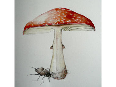 Peinture botanique - Maison Maugis