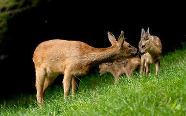 2016-parc-animalier-pyrenees-06-argeles-gazost