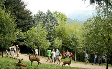 2016-parc-animalier-pyrenees-11-argeles-gazost