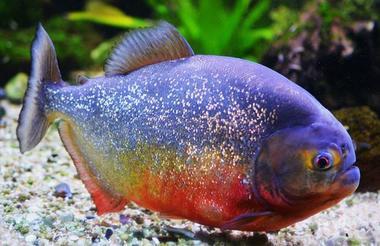 AquariumTropical1-pierrefittenestalas-HautesPyrenees