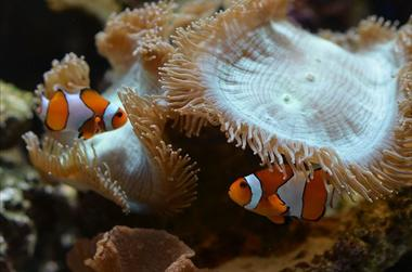 AquariumTropical10-pierrefittenestalas-HautesPyrenees