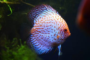 AquariumTropical11-pierrefittenestalas-HautesPyrenees