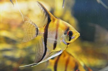 AquariumTropical2-pierrefittenestalas-HautesPyrenees
