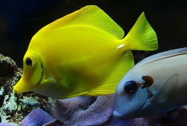 AquariumTropical9-pierrefittenestalas-HautesPyrenees