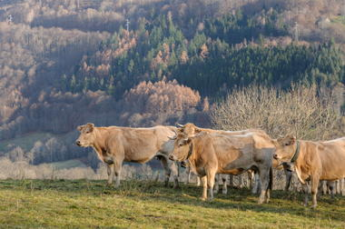 SIT-FermeBretou-HautesPyrenees (3)