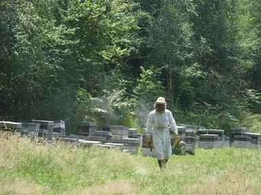 apiculteurmielleriedesescales-villelongue-HautesPyrenees.jpg