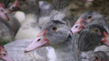 DEG-foie-gras-du-domaine04
