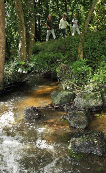 sentier-d-interpretation-arboretum-pontmain-53-iti-cp greboval (13)