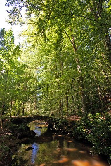 sentier-d-interpretation-arboretum-pontmain-53-iti-cp greboval (6)