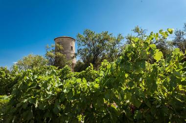 Chateau Pech Celeyran-Salles d'Aude_0