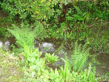 Au cours du ruisseau - Magali Guerard - gite à Saint Germain de Livet (4)