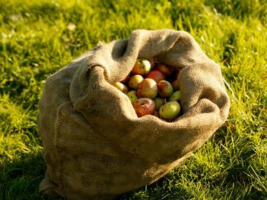 Calvadosd_Sac de pommes