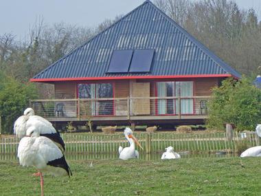 Cerza Safari Lodge - Hermival les Vaux - vue sur pelican
