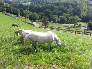 Chevaux au pré Calvados (4)