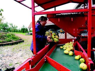 Domaine des Essarts Pommes