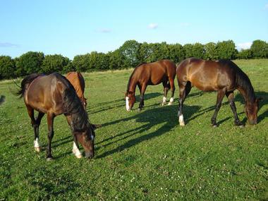devalparc-chevaux