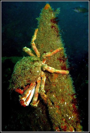 Plongeurs du Cap
