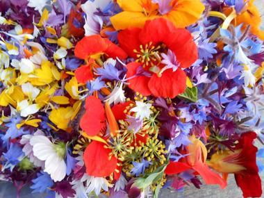 Balades gourmandises florales - Ploërmel - Brocéliande - Bretagne