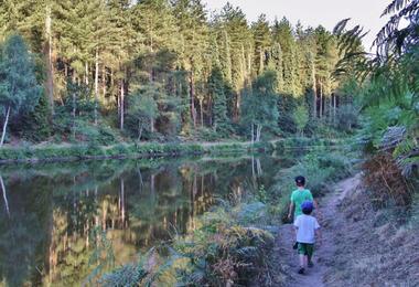 Forêt Iffendic chambre au loup domaine de Careil et boutavent ©office de tourisme Lac de Trémelin (5)