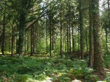 Forêt de Montfort sur Meu