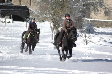 cheval et neige