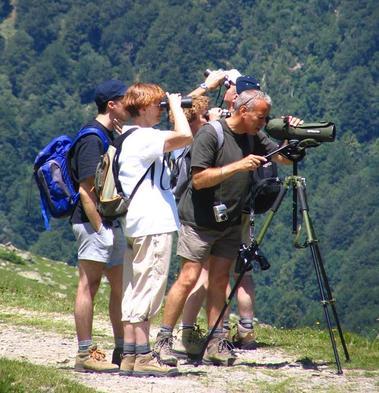 Observation marmotte observatoire de la montagne