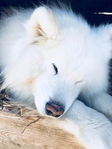 chien angaka