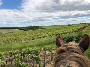 Vignes à cheval
