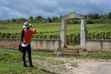 Vineatour - Vignes Chevalier-Montrachet