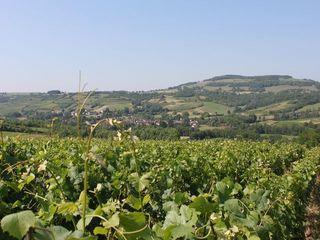 Vignes des Hautes Côtes