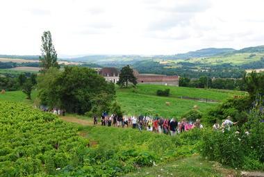 groupe dans les vignes