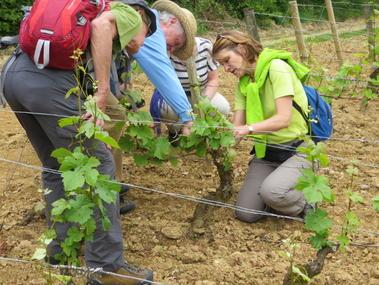 atelier de vin dans les vignes - Manoir Bonpassage