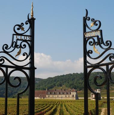 Terroir des Grands Crus de Bourgogne Ecole des Vins