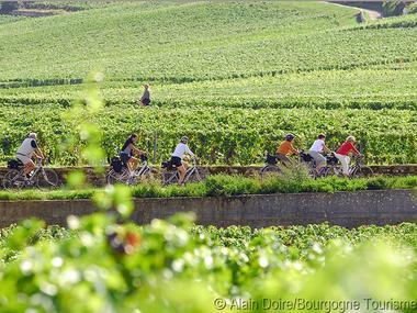 OP031BOU000V5066PF - Velos-vignoble_Photo-Alain-Doire_Bourgogne-Tourisme