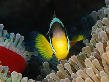 Aquabulle Plongée