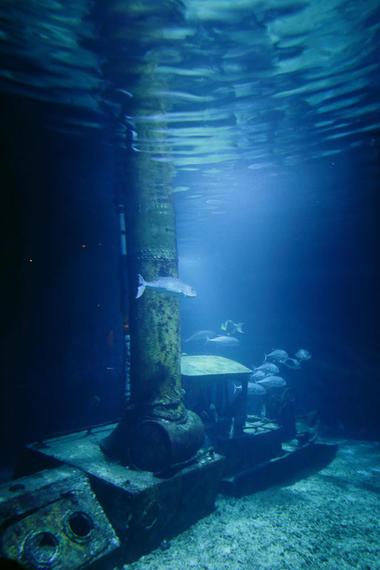Aquarium de La Réunion