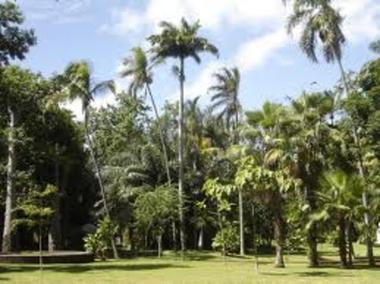 Jardin de l'Etat (Le)