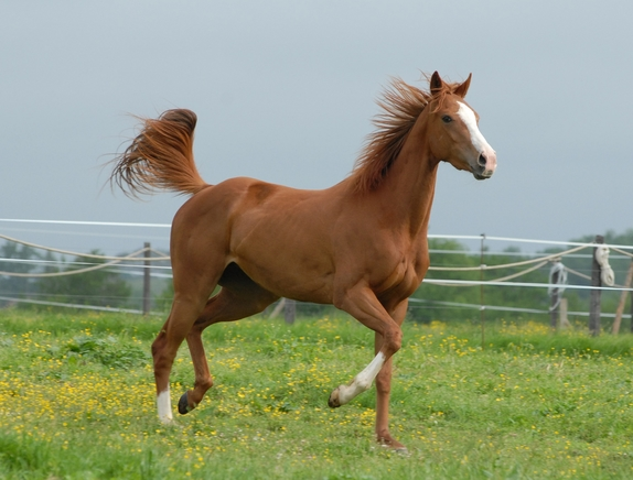 horse-2031086_1920.jpg