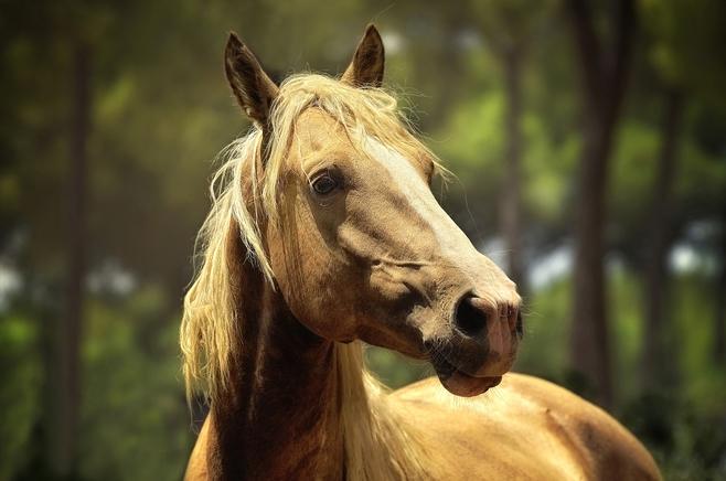 horse-1853122_1920.jpg
