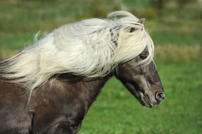 horse-1330704_1920.jpg