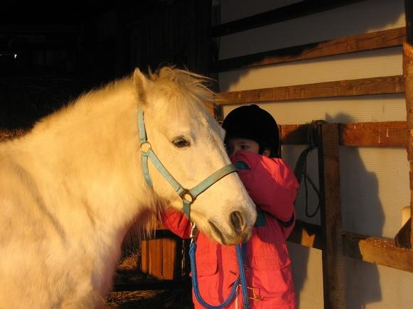 pony-921999_1920.jpg
