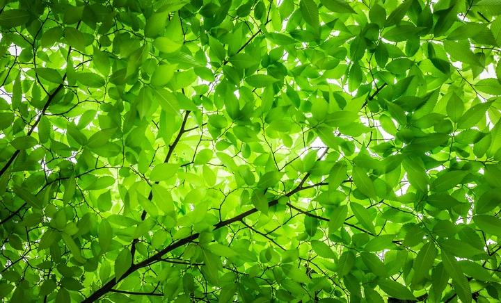 wood-2249363_1920.jpg