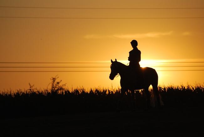 horseback-riding-1576108_1920.jpg