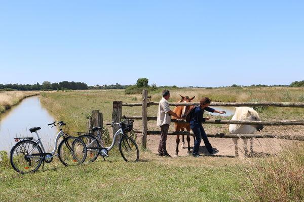 rochefort-ocean-sortie-natureestuaire-vélo©S.Boutin (3).JPG