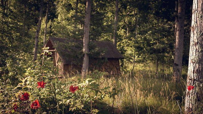 Camping-L'heureux-hasard,-cabane-en-bois,-nature,-forêt,-val-de-Loire,-Cheverny,-zoo-de-Beauval.jpg